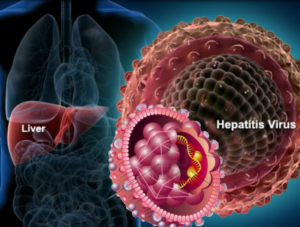 hepatitis b virus