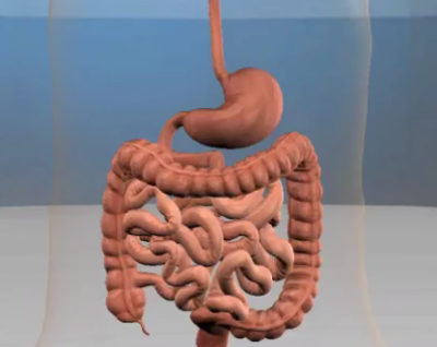food digestion canal