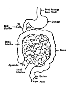 The Food digestion canal