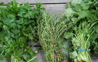 10 Herbs for High Blood Pressure
