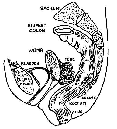 Ulcerative Colitis Missed Period